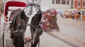 cavalo : A close-up of horse harnessed to a beautiful festive carriage that is standing on a cobbled square.