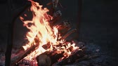 wild : Beautiful view of burning wood at night. Open fireplace. Stock Footage