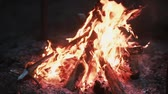 lenha : Beautiful view of burning wood at night. Open fireplace. Stock Footage