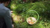 leaf : Young beautiful woman squatting and looking for mushrooms. Basket with mushrooms standing near on the grass. Back view. Stock Footage