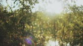 Боке : Beautiful nature landscape. Sun rays shining through the green foliage, leaves in bright day.