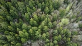 helicóptero : Top view of the mixed forest. Aerial drone shot of the beautiful landscape. Flight over the green trees.