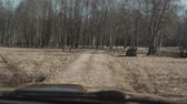 листва : View inside the car on the autumn landscape in the forest. Driver ride the automobile on the countryside.