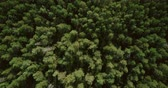 textura : Drone flying forward above beautiful green forest. Aerial 4K flyover topview shot of early autumn treetops.