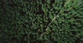 подниматься : Drone ascending and rotating over forest road. Aerial 4K vertical zoom out background shot of quiet evergreen pattern.