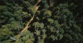 tranquilo : Drone ascending and spinning above sunny forest. Aerial 4K vertical top view shot of peaceful evergreen trees and road.