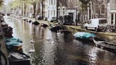 duck : Amsterdam, Netherlands. river with water birds and boats. Wonderful scenery of wild swans and ducks in autumn city plase Stock Footage