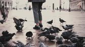 marco : Big flock of pigeons around happy female tourist with camera on old San Marco city square in Venice, Italy slow motion.