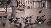 Happy excited female reporter with camera walks on autumn San Marco square and flock of pigeons in Venice slow motion. Stok Video