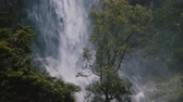 intocada : Beautiful medium shot of green tree in front of large jungle waterfall rushing down in exotic windy Sri Lanka forest. Stock Footage