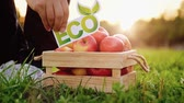 An unidentified man puts an eco inscription on a box with fresh tasty red apples standing on a green lawn on a sunny warm summer day. Farm Products Concept. Full hd 1080 footage