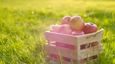 dárková krabička : The camera moves away from a wooden crate with red beautiful fresh ripe apples standing on a green lawn on a sunny warm summer day. Fruit and Juice Concept. Full hd 1080 footage