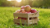 Camera approaches to a wooden crate full of fresh large, ripe red apples standing on a green lawn on a sunny warm summer day. Harvest concept. Full hd 1080 footage