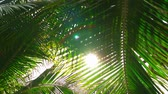 Beautiful Nature on Resort. Sun Shining Trought Paln Leaves of Green. Exotic Tropical Nature.