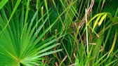 brazilie : Exotic Palm Leaves of Bright Green Color. Beautiful Tropical Nature. Green Plants. Stockvideo