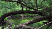 on line : A tree-lined city river. There are debris and dirt left over from the spring flood. Stock Footage