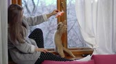Young girl is playing with a kitten at home. She sits by window on windowsill in a warm dressing-gown. Winter in the street. Lop-eared cat. Stok Video