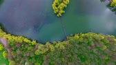 aerial view of the island surrounded by beautiful willows and colorful forest