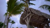bermudas : Palm tree leaves against blue sky and tropical wind in Punta Cana, Dominican Republic