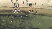 People feeding swans and seagulls on the sea coast in Varna, Bulgaria, aerial video Wideo