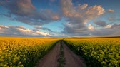 industrial background : Road in the countryside. Dramatic sunset over rapeseed fields.
