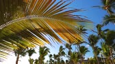 Coconut palm trees against blue tropical sky with clouds. Summer holiday on exotic island. Wideo
