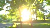 flare light : Sun flares and bokeh seen through the trees at a park (Package of 2 scenes, panning the left of a tree trunk) Stock Footage
