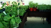 bazar : Farmers Market and Organic Vegetables (package of 10 scenes)