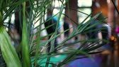 sekans : Diverse group of people in yoga class. View from behind an indoor plant pot during a yoga session. Blurry practitioners are seen stretching in the background.