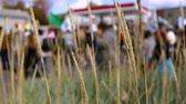 jednota : Large peaceful environmental demonstration passing through town. People and buildings are revealed through tall grass with selective focus