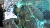 živý : Big carps in the aquarium on fish market on the background of buyers