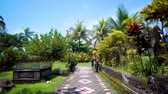 laje : pathway in tropical forest - vacation background. Palm trees and sun. Bali, Indonesia