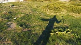 Shadow of a high person raising a gimbal over a green lawn in slow motion