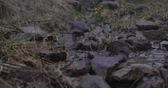 Snaky streamlet flowing among stones and grass in the Carpathians in slo-mo Videos