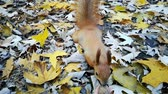 elâ : Red squirrel take nut from the hand of woman - pov view in slow motion.