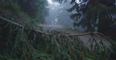 끝 : Broken spruce tree top inclined to the land in the Carpathians in slo-mo