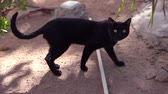 agyar : Smooth coated black cat says meow in slow motion