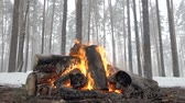 empolgante : Wild camp fire from big logs in winter forest under falling snow