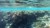 polinesia francese : 4k slow motion - amazing shot of the underwater sea in the red sea.