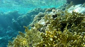 duro : 4k - beautiful coral reef in the Red Sea with a lot of amazing fishes.
