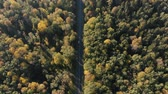 otimismo : Aerial shot of the thin highway in the Carpathian Mountains forest in summer