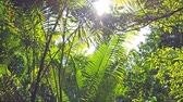 Sun light going through green leaves in jungle forest. 4K nature background clip