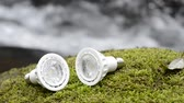 Two LED light bulbs on a green moss in front of brook