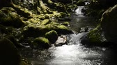 Fast flowing brook between mossy rocks in Kagoshima