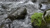 Thin brook with green grass growing stones in Kagoshima Стоковые видеозаписи
