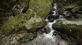 Fast flowing white narrow brook between mossy rocks in Kagoshima Стоковые видеозаписи