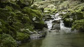 Thin brook flowing ravine between mossy rocks in front of green forest in Kumamoto
