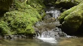 Thin narrow brook flowing rock steps from green moss in Kumamoto