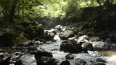 brook : Narrow brook flowing through among stones under bright green forest in Miyazaki