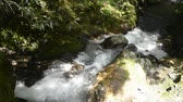 brook : Fast narrow white brook flowing mossy rock slope in Kagoshima